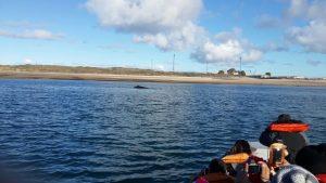 Ballenas Yubarta (1)